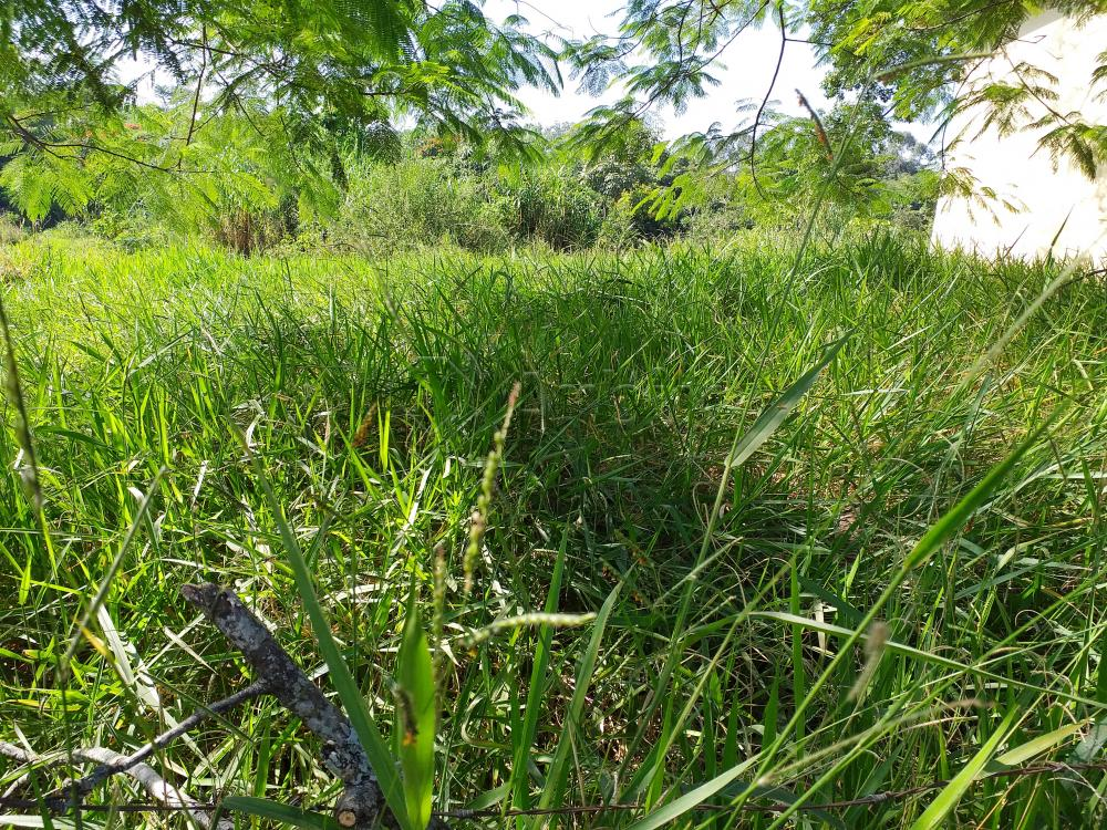 Comprar Rural / Chácara em Limeira apenas R$ 650.000,00 - Foto 6