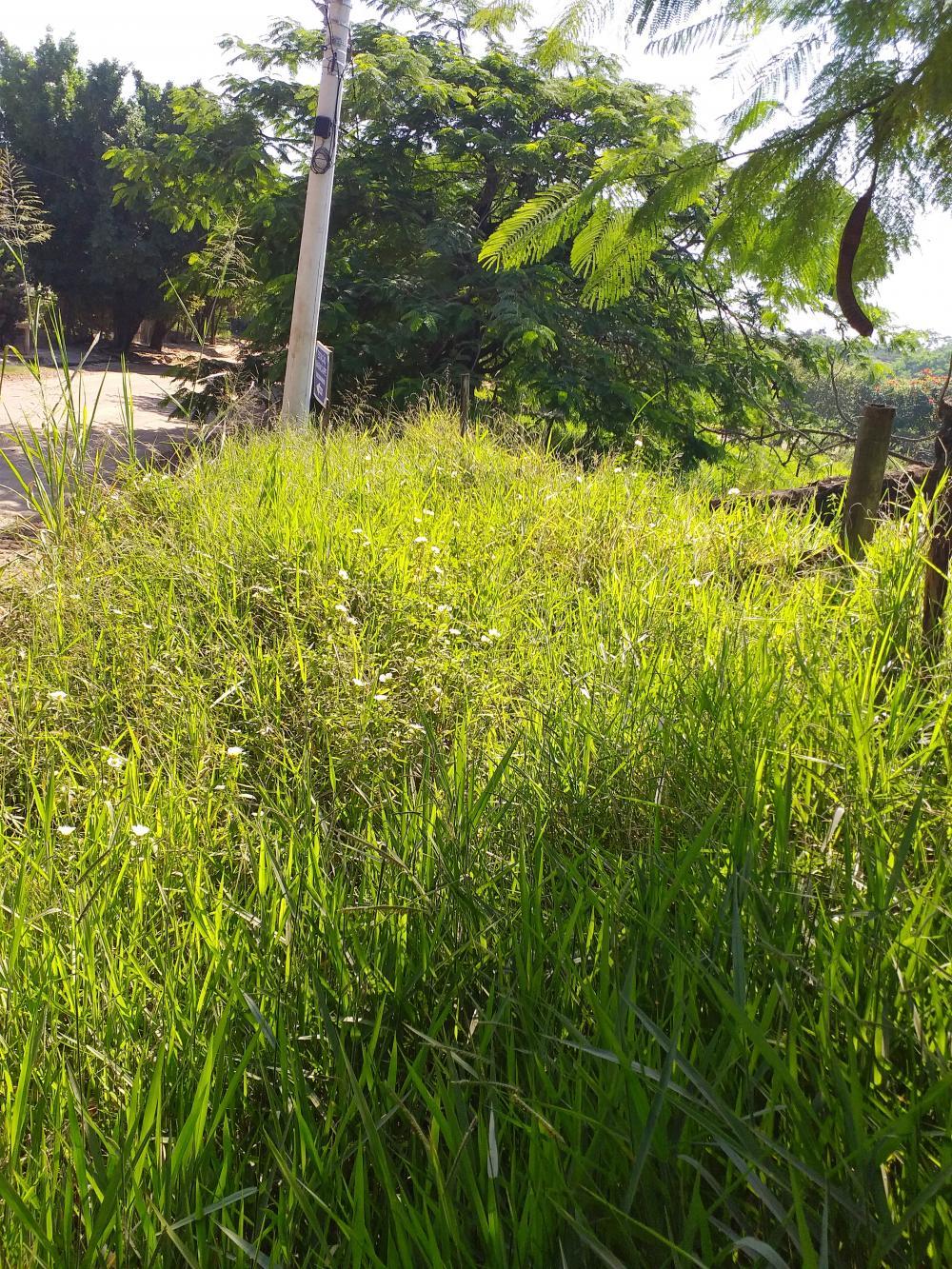 Comprar Rural / Chácara em Limeira apenas R$ 650.000,00 - Foto 5